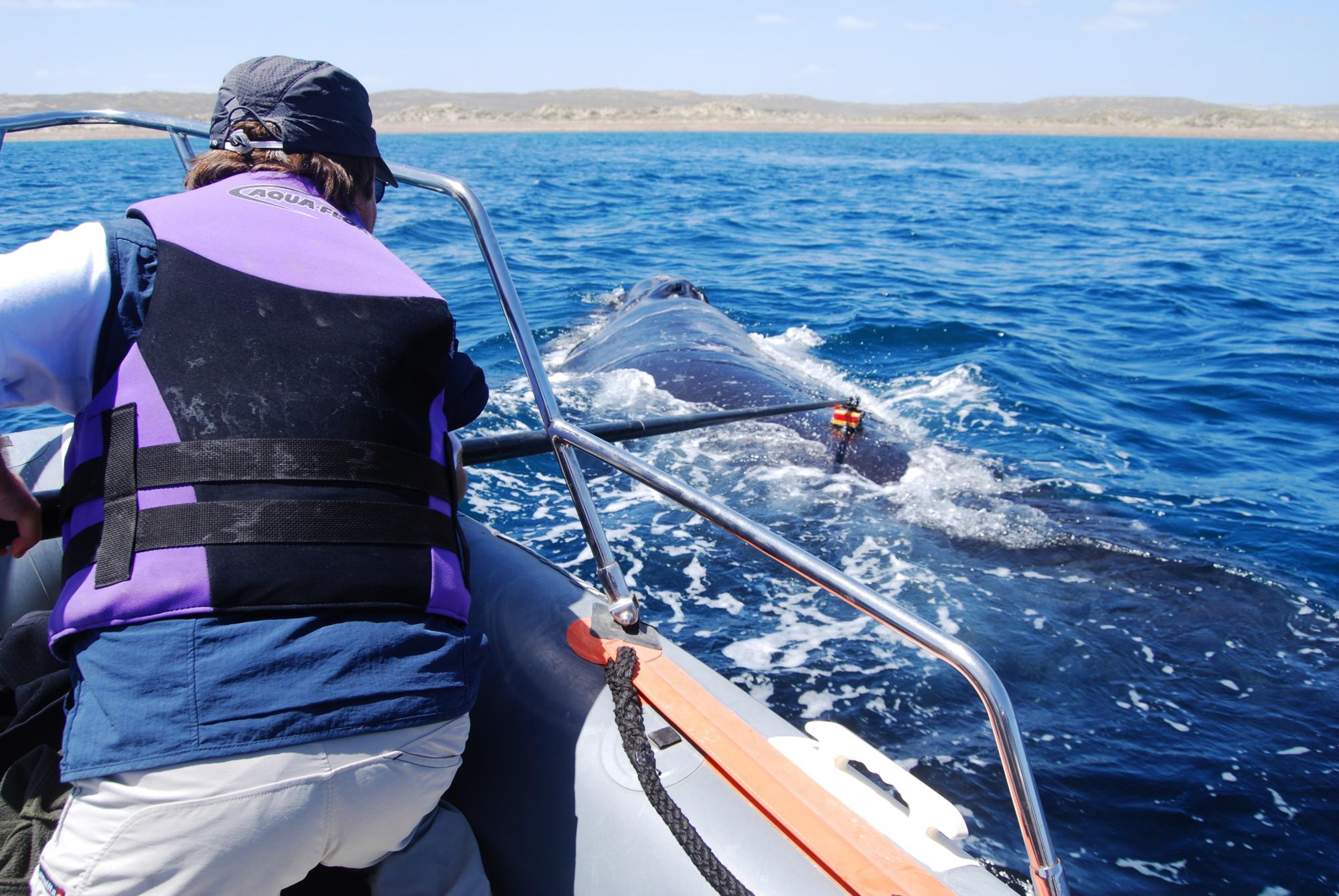 Biologistes Et Baleines 7