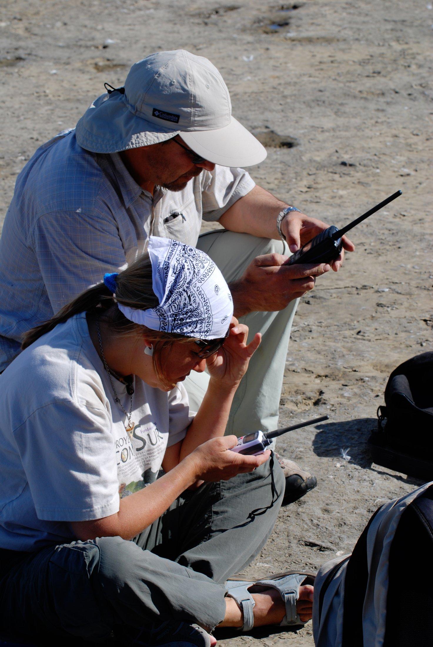 Biologistes Et Goélands 9