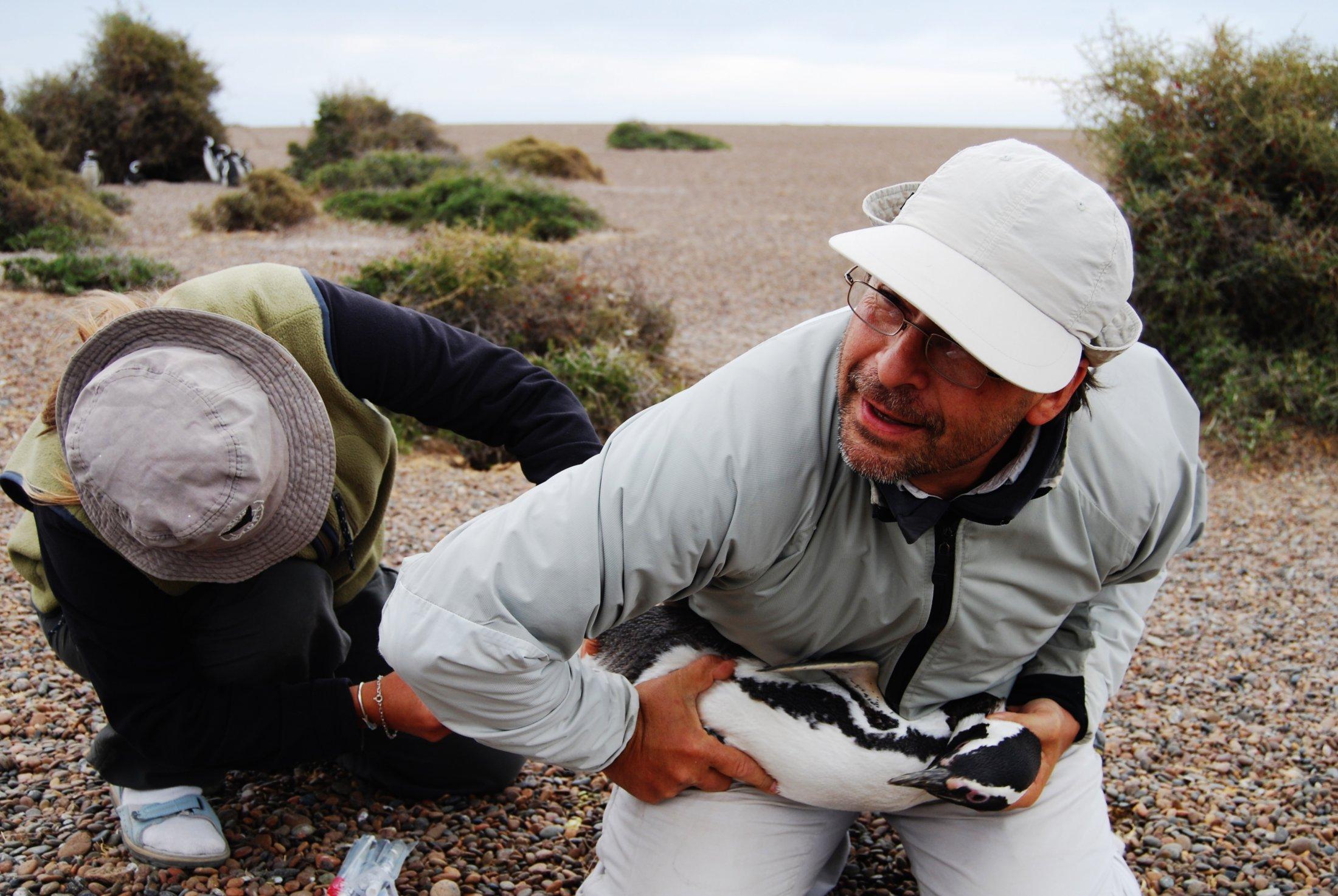Biologistes Et Pingouins 14