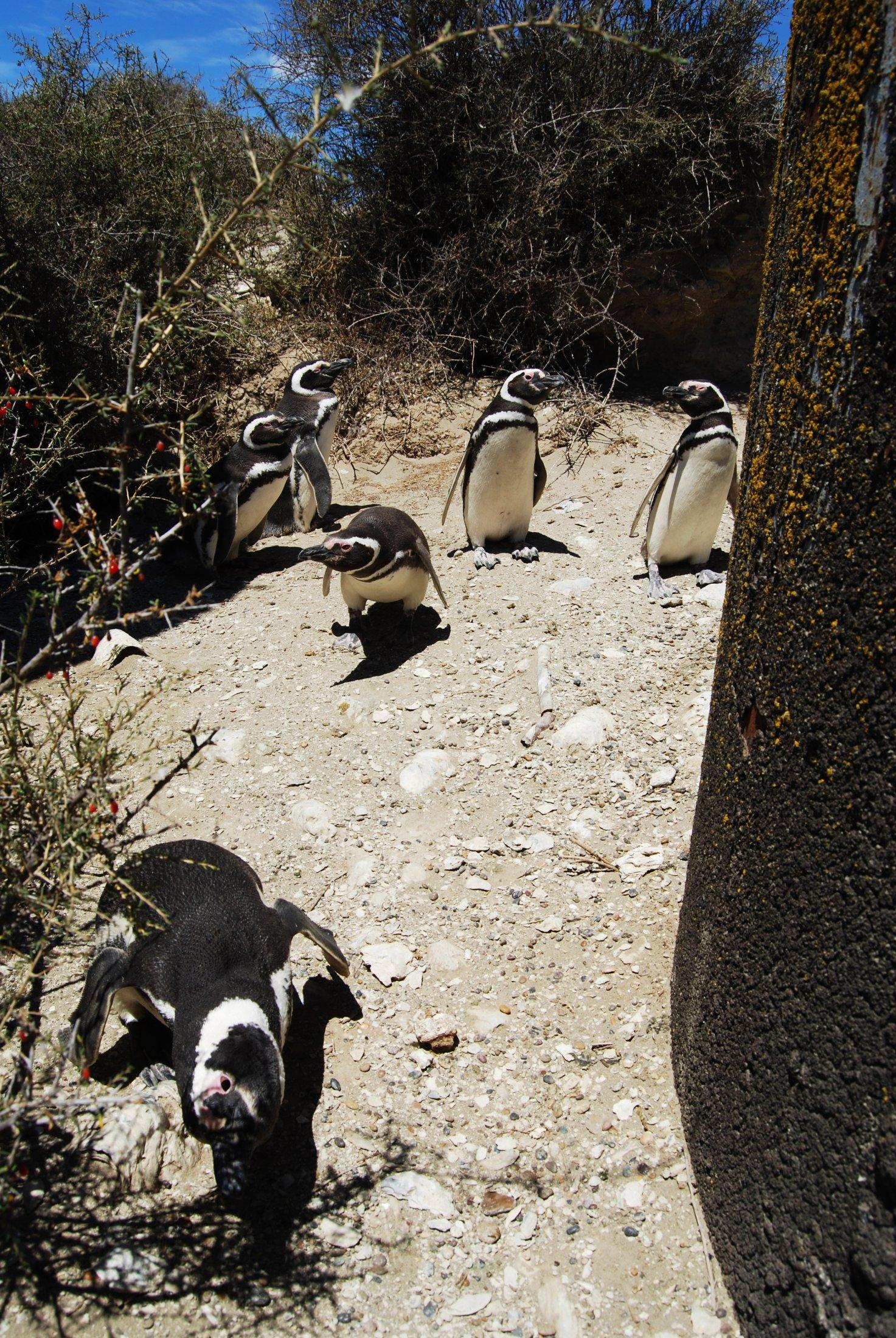 Biologistes Et Pingouins 16
