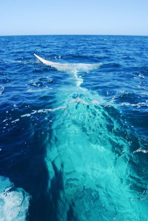 Biologistes Et Baleines 14