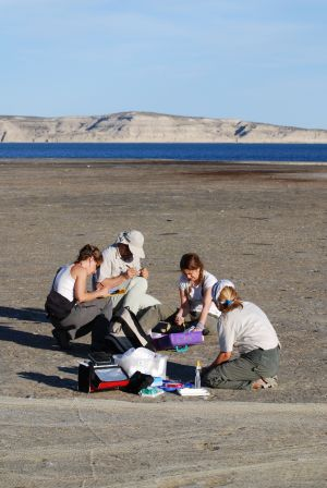 Biologistes Et Goélands 4