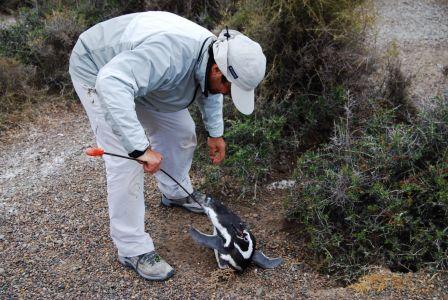 Biologistes Et Pingouins 6