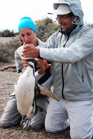 Biologistes Et Pingouins 8
