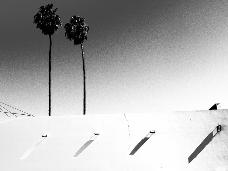 Corrientes palmiers