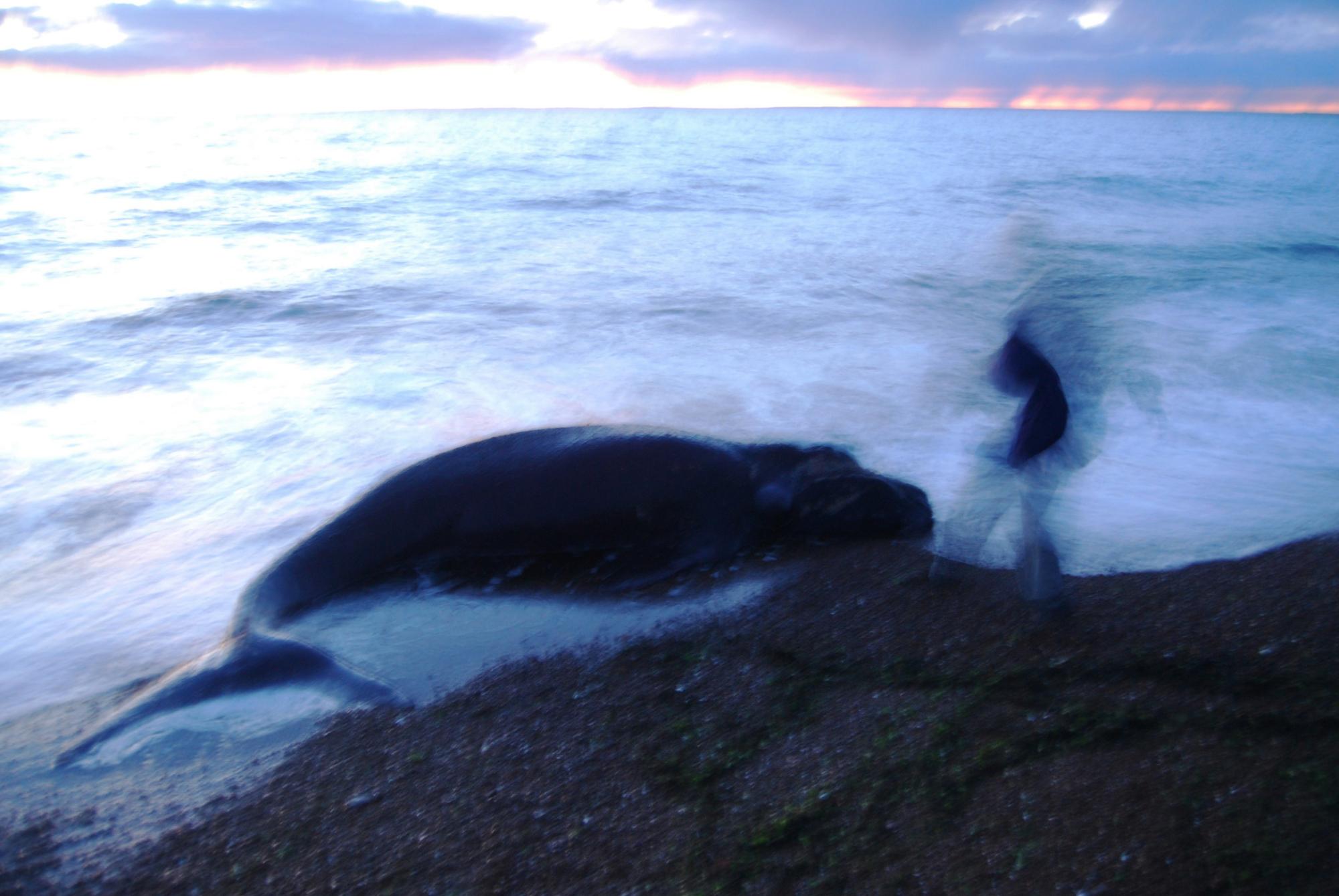 Biologistes Et Baleines 21