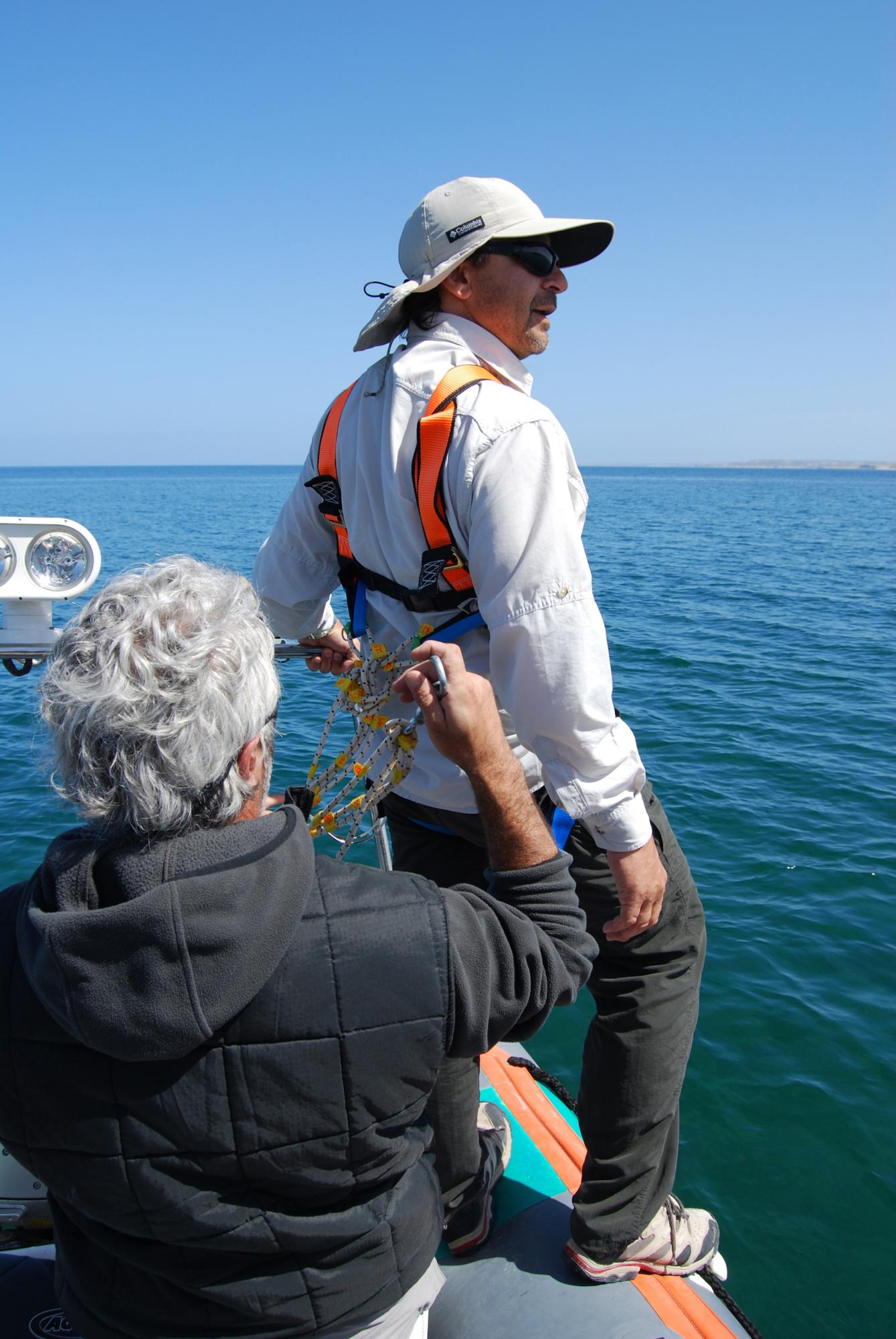 Biologistes Et Baleines 8