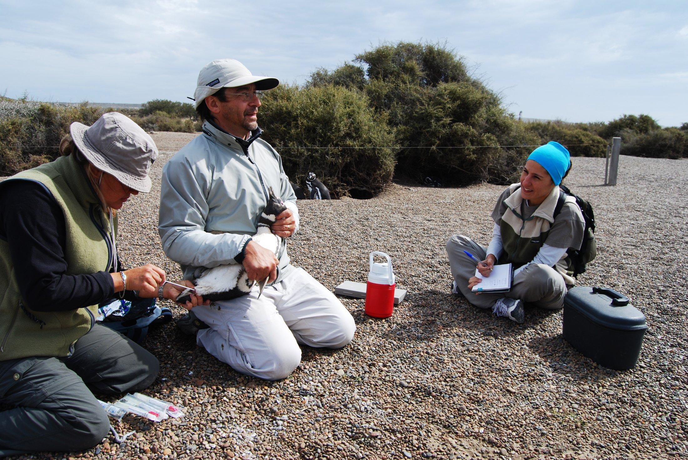 Biologistes Et Pingouins 10