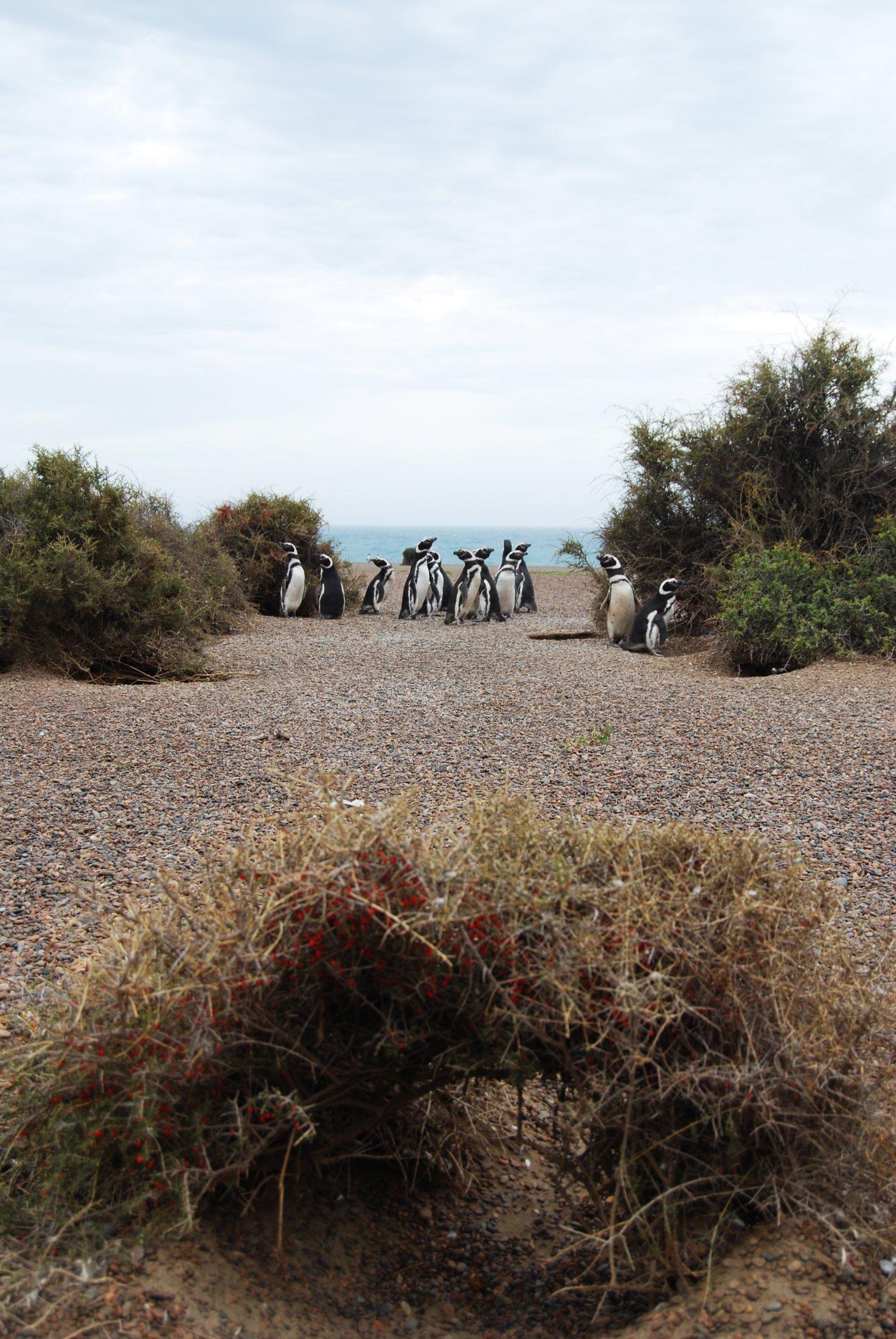 Biologistes Et Pingouins 12