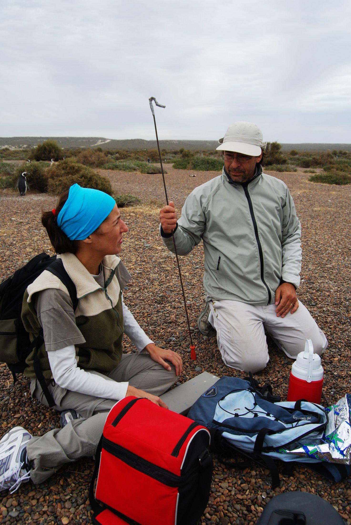 Biologistes Et Pingouins 3