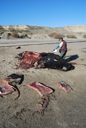Biologistes Et Baleines 20