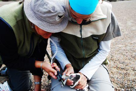 Biologistes Et Pingouins 11